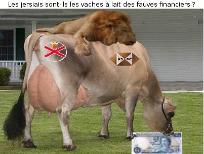 Vache jersiaise 1